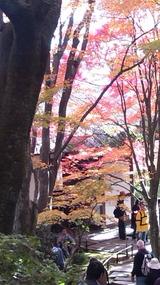 京都嵐山常寂光寺 (2013,11/23)