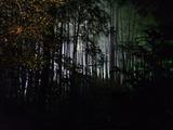 竹林の闇の向こうに光明が