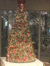 丸ビルのクリスマスツリー(Dec.22nd 2011)