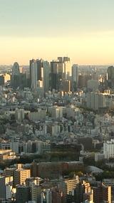 夕日に染まる新宿高層ビル群