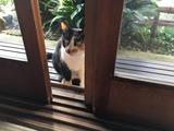 食事時にやって来るとは. clever cat!