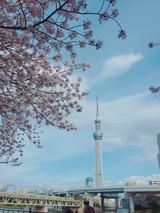 ぽかぽか陽気の東京 (4/12/2017)