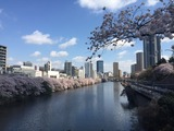 外堀と中央線と桜(from 香織先生)