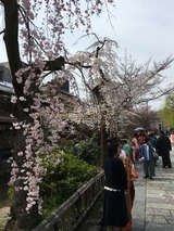 祇園白川. 婚礼用の写真撮影 (4/5/2017)