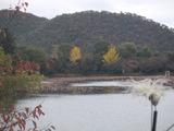大覚寺大沢の池