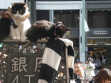 the richest cats in Japan? residents of Ginnza
