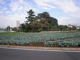 都内にも広大な畑が