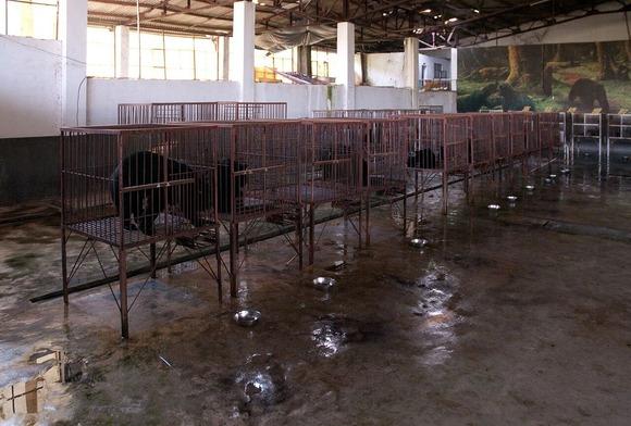 ミャンマーでのクマの畜産