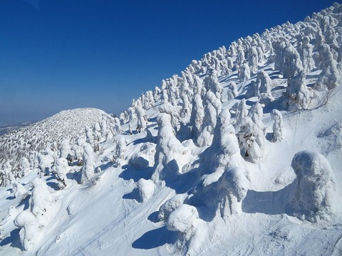八甲田の樹氷(日本三大樹氷)
