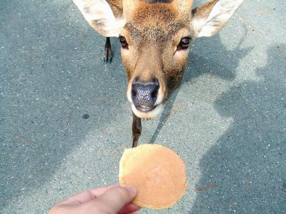 鹿せんべいと鹿