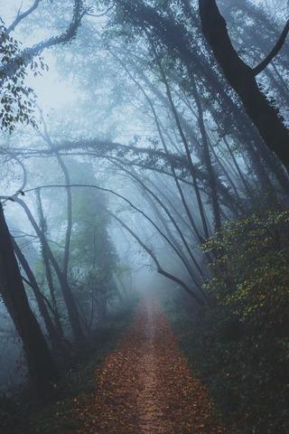 霧のでる登山道