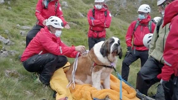 【映像】登山の途中 疲れて動けなくなった「救助犬」 人間に救助され、英国最高峰(978M)から担架で下山