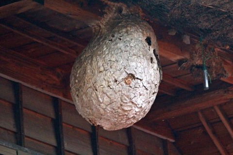 スズメバチの巣の駆除に失敗した失敗した失敗した