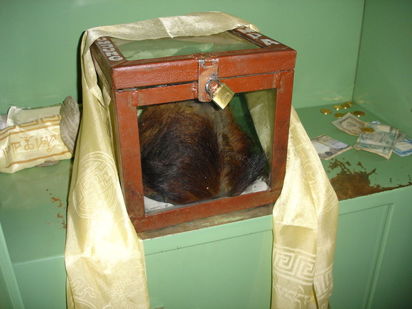 イエティのものだと称されている頭部(ネパール、クムジュンの僧院)