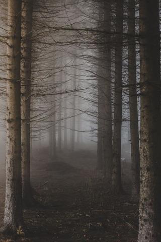 キリのでる森