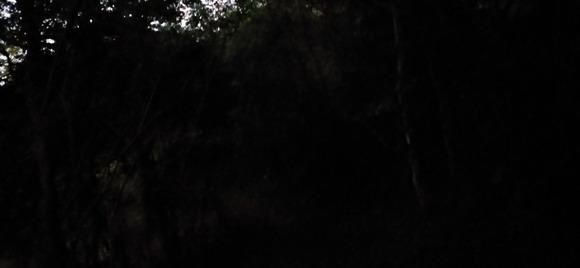 薄暗い登山道 (1)