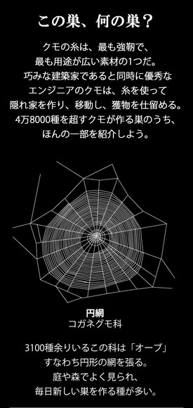 クモの巣の説明