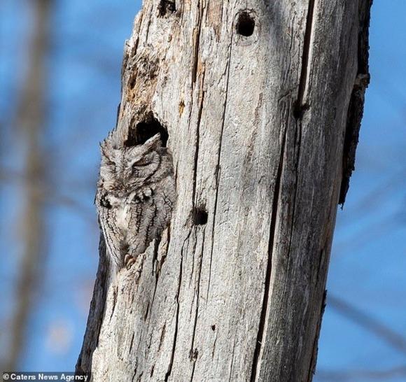 木と同化したフクロウ