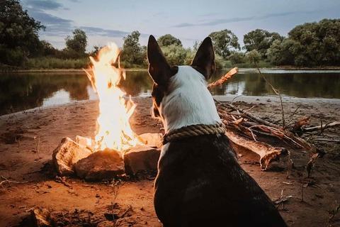 キャンプに犬