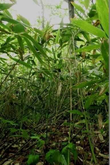 藪の中 (1)