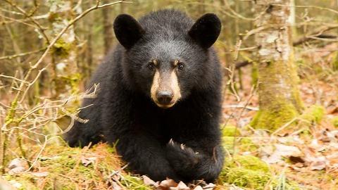 black-bear-7-desktop-wallpaper