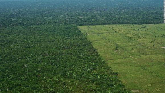 アマゾンの伐採