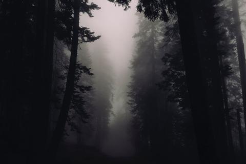 霧のかかる森