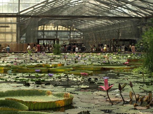 掛川花鳥園 大温室