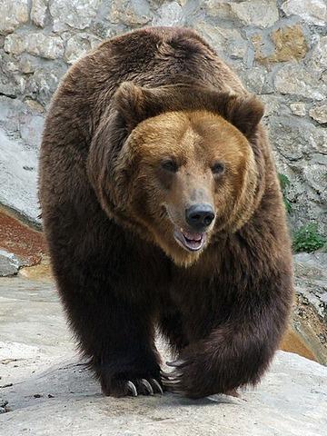 【急募】熊(羆)避け道具に自信ニキ
