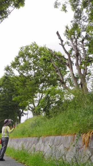 切り取られた樹木