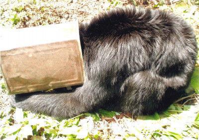 【岩手・宮古】旧田老鉱山跡地で一斗缶を頭に被り外れず暴れるクマを発見!