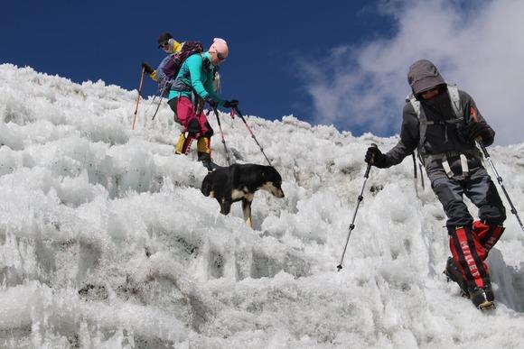 登山する犬と登山者