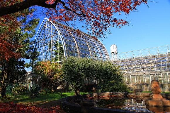 小石川植物園 - 東京大学大学院理学系研究科附属植物園