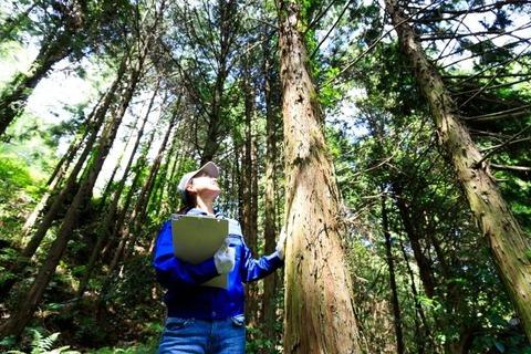 木を見上げる女性
