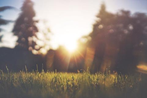 朝日と芝生