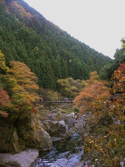 800px-Autumn_leaves_at_Hatonosu_Kobashi_Bridge