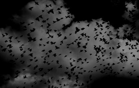 空を飛ぶ無数の鳥