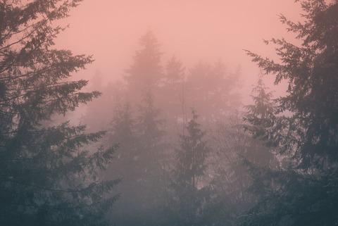 霧のでる山