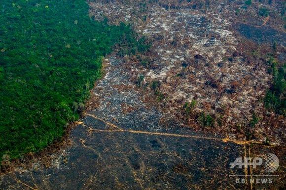 破壊された森林 (1)