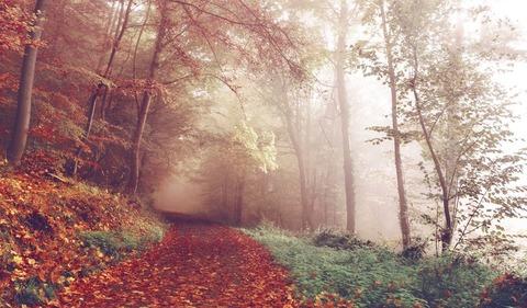 霧の出る森