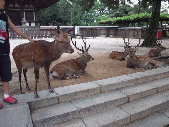 1280px-Nara_Park_Shika