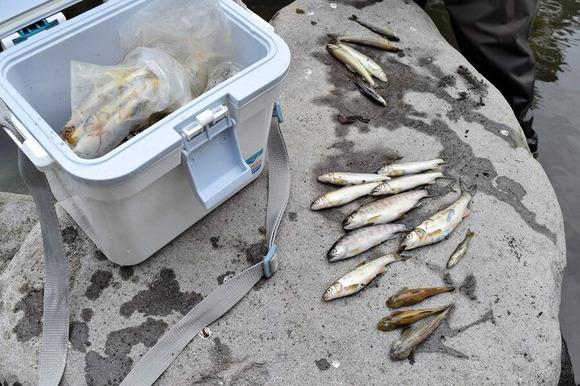 川魚 (1)