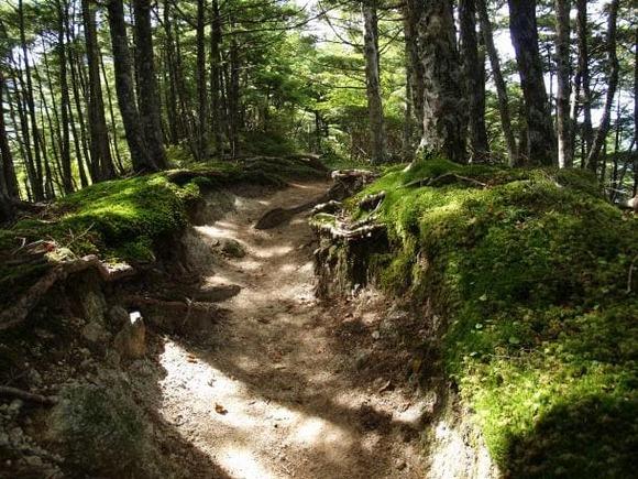 trail (1)