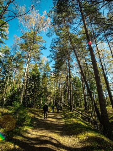 hike (1)
