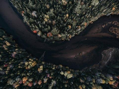 森の俯瞰写真
