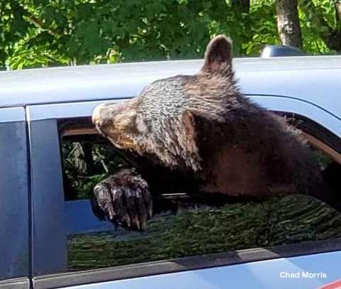 窓から顔を出すクマ