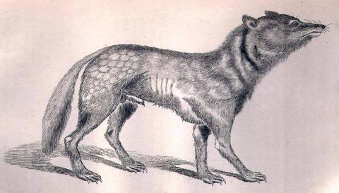 日本オオカミ