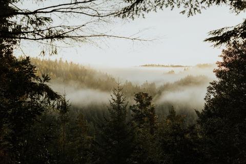 霧の出る山