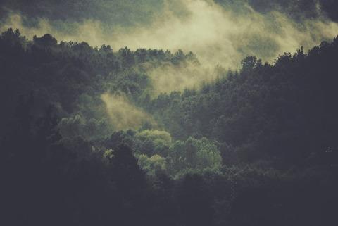 霧がかかる森