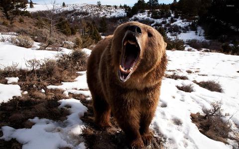 roaring-brown-bear-15969-1920x1200